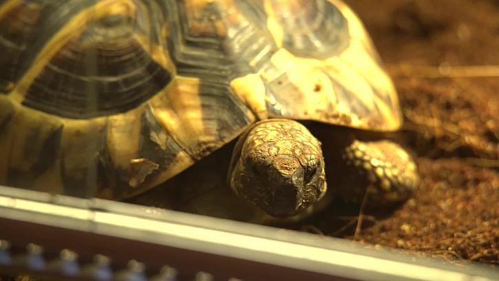 Víte vše o chování želv?