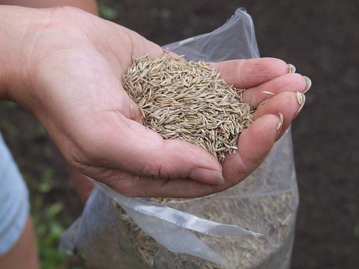 Na velké plochy dosijeme travní osivo