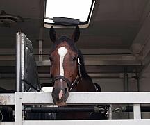Přepravníky pro koně
