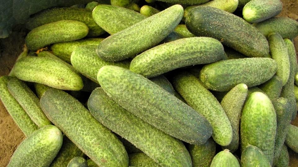 Soutěž: Vypěstujte si vlastní okurky ze semínek!