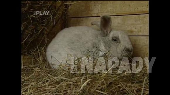 Péče o králíky v zimě