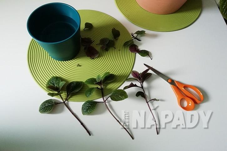 Odstřižené výhony vložte do vázy s vodou