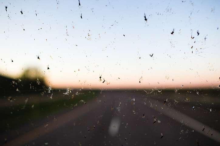 Hmyz na skle