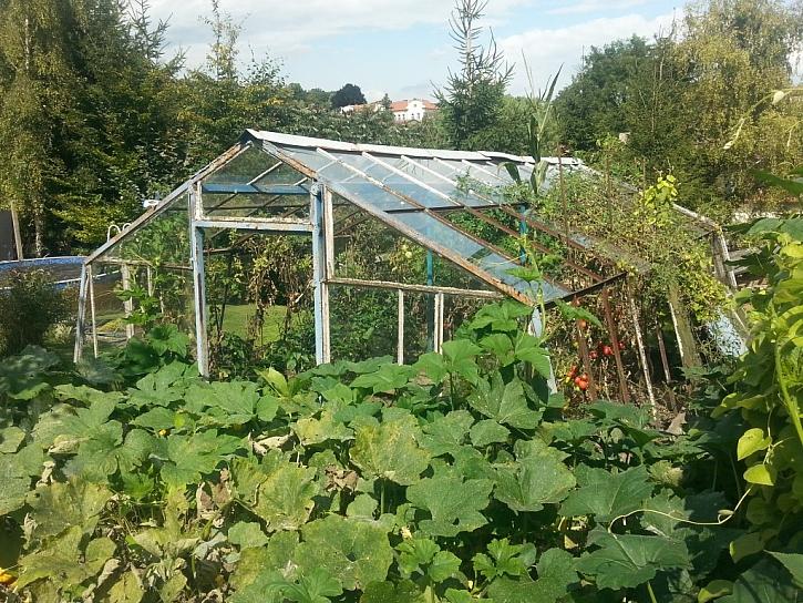 Neduhy špatných a příliš levných skleníků
