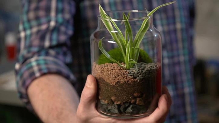 Usazení rostliny