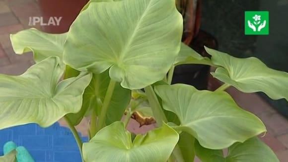 Přípravky na ochranu a výživu rostlin