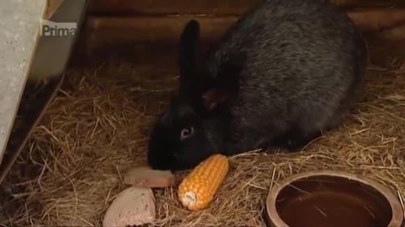 Chov králíků v zimě