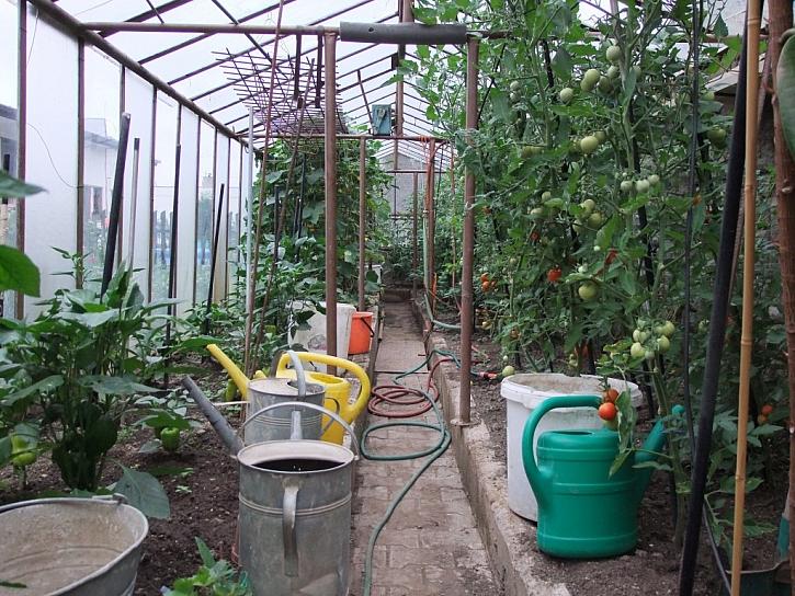 Ochrana a výživa zahrady v létě