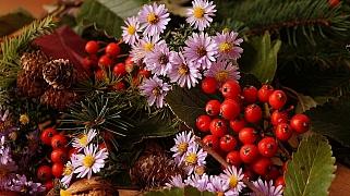 Plody jeřábů patří mezi klenoty podzimu: Rozeznáte jedlé od dekorativních?