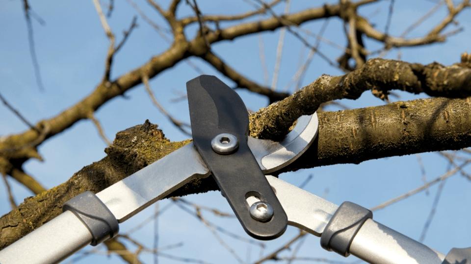 Jak na podzimní řez ovocných stromů? Pozor na tři nejčastější chyby!