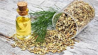 Fenyklová semena: Léčivou sílu, chuť a aroma ocení celá rodina