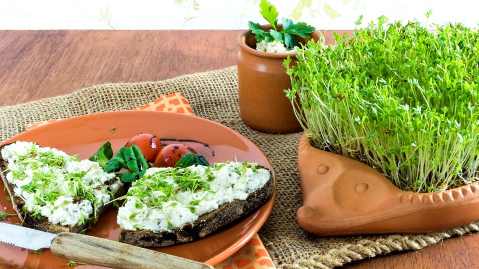 Zdravá a dobrá řeřicha: Ideální zelenina kdomácímu rychlení
