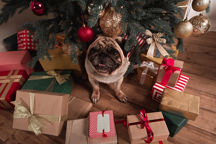 Užijte si vánoční pohodu se psem (Zdroj: Unsplash)