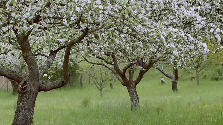 Jak se úsporně vypořádat se suchem na zahradě i v sadu