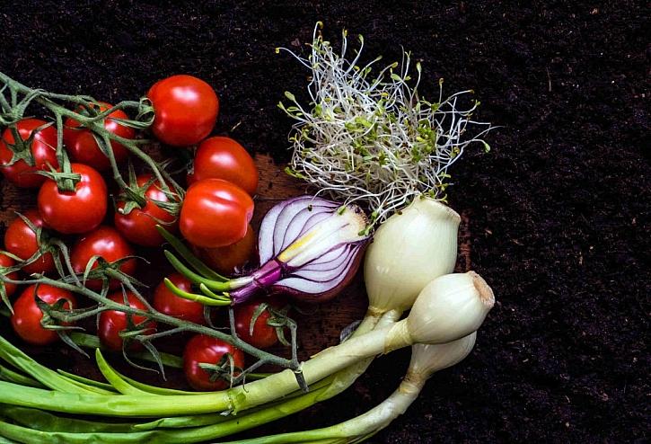 Není nad doma vypěstovanou zeleninu