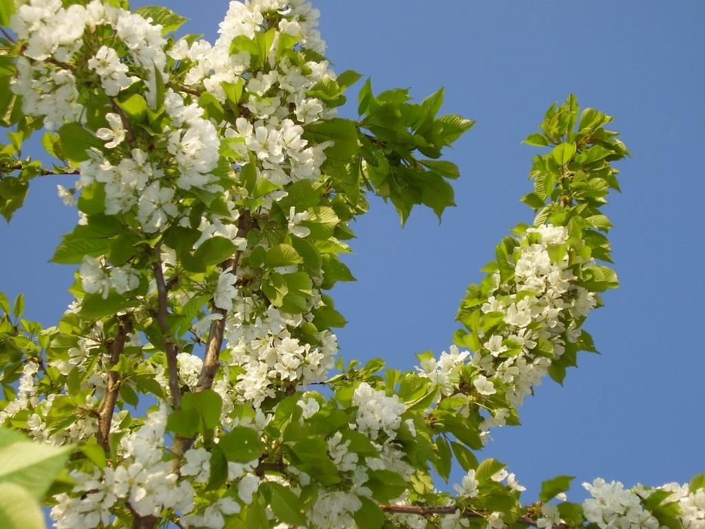 Májová ovocná zahrada