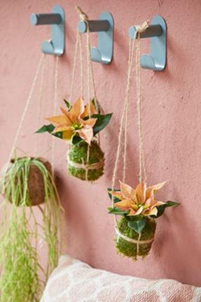 Další alternativou ke klasické rostlině v květináči je kokedama