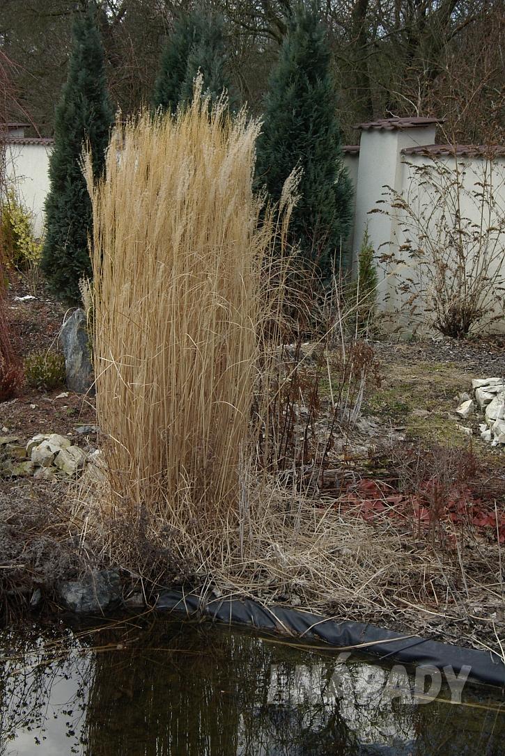 2.vysoké trsy travin jsou dekorativní i v zimě