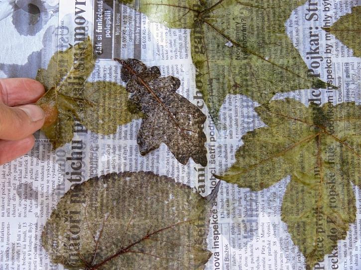 Preparování listů – návod