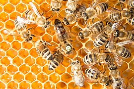Začněte s chovem včel právě teď