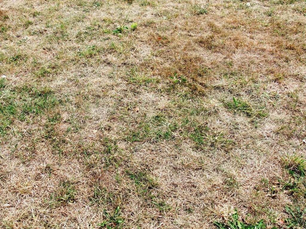 Úprava trávníku po zimě