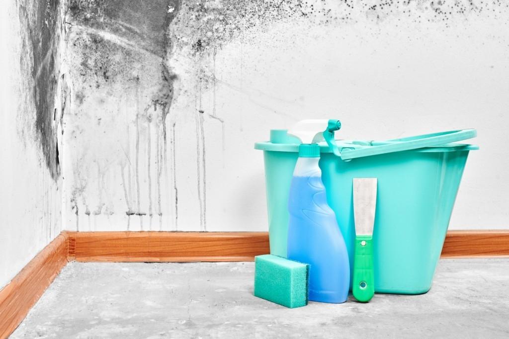 6 rad, jak bojovat proti plísni v domě