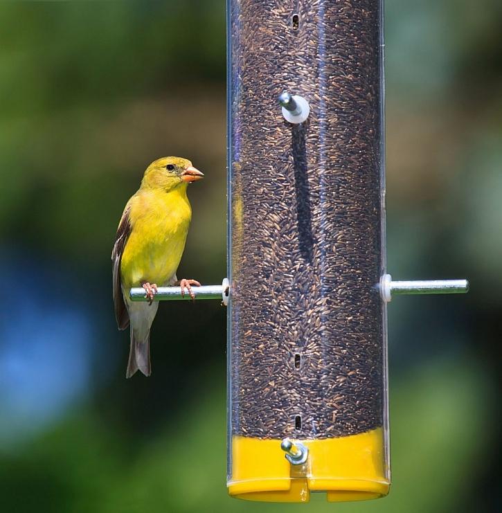 Ptačí potrava