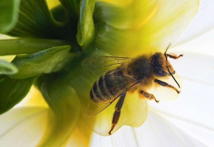 Udělejte dobrý skutek, založením včelího bufetu pomůžete včelám (Zdroj: Depositphotos (https://cz.depositphotos.com))