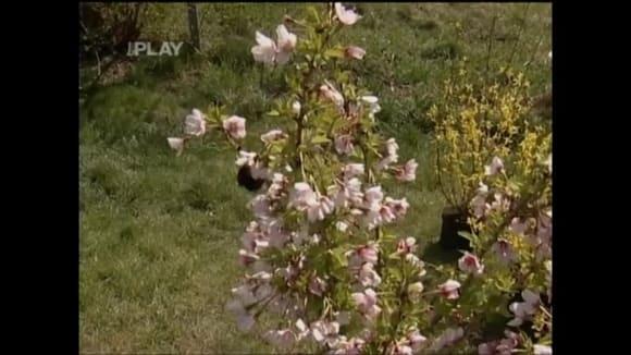 Dřeviny, které kvetou na jaře