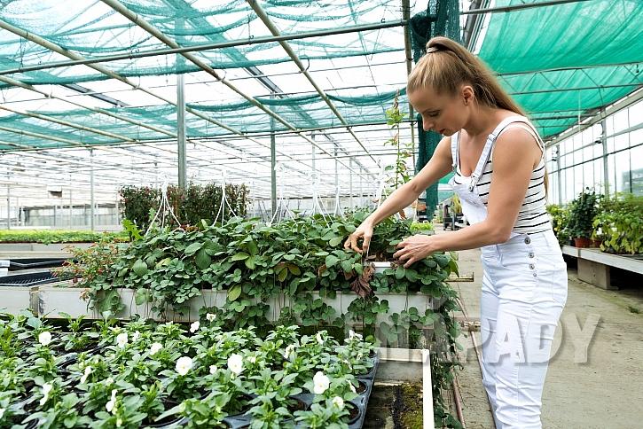 Zastínění chrání rostliny