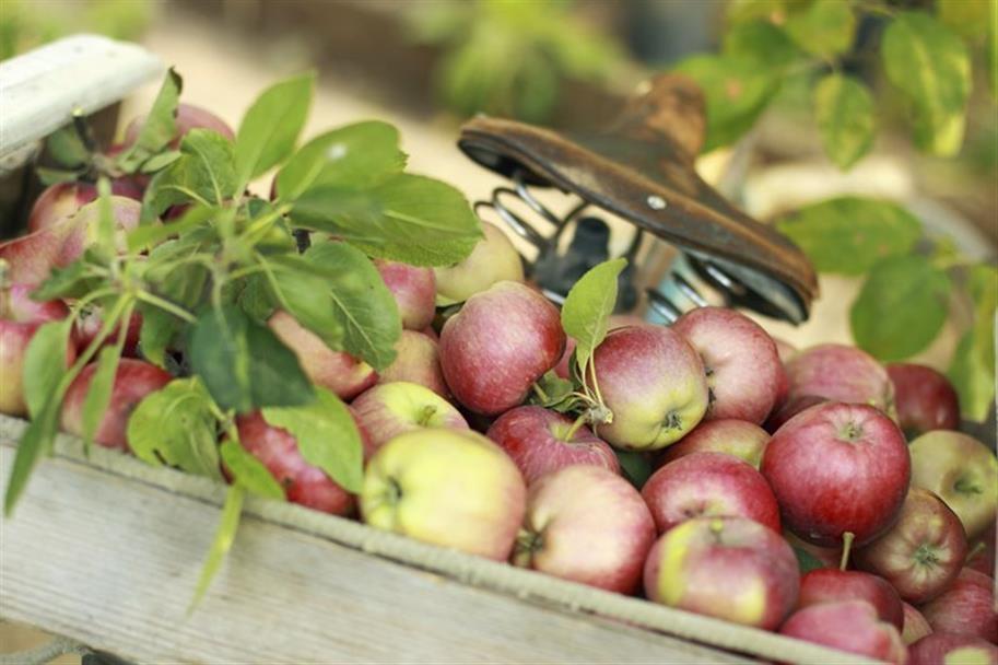 Kam na výlet: Jablka a jablečné speciality můžete ochutnat vHolovousích, na zámku Krásný Dvůr ivPraze