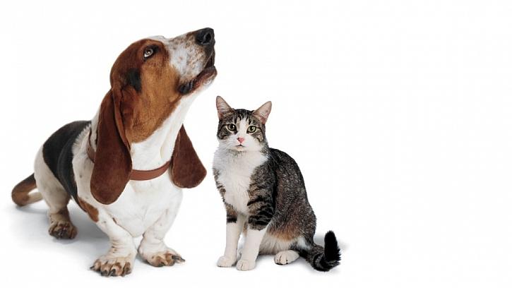 5. Blechy nejsou na zvířeti vidět, proto nejsou ani v domácnosti