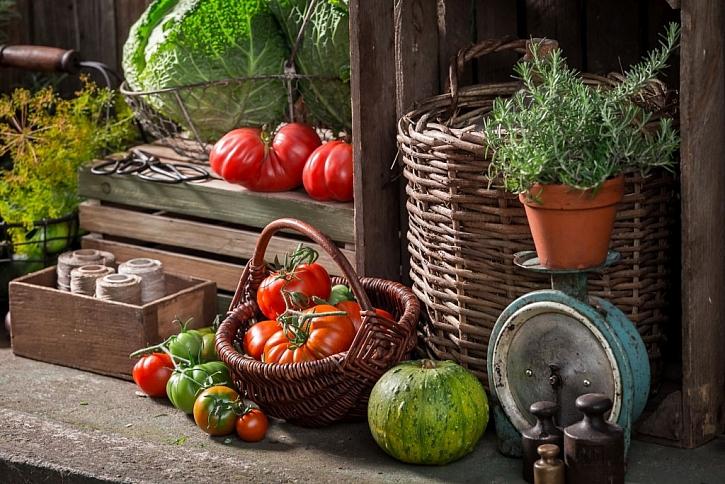 Uskladněná zelenina