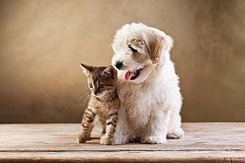 U psů a koček si raději nehrajte na domácího lékaře