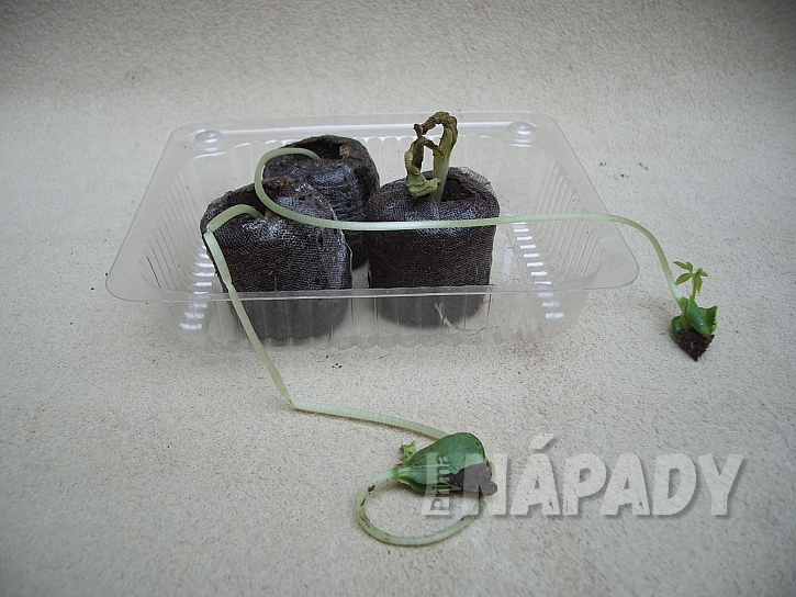 4.vytahle rostliny z nedostatku svetla
