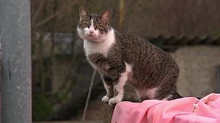Potřebné rady pro (ne)kastraci koček