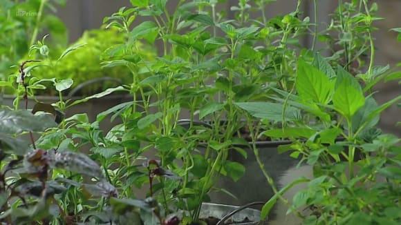 Netradiční bylinky