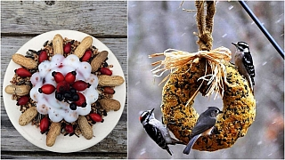 Super nápady, které potěší opeřené kamarády aozdobí zimní zahradu