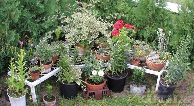 Zahrady čtenářů díl 4