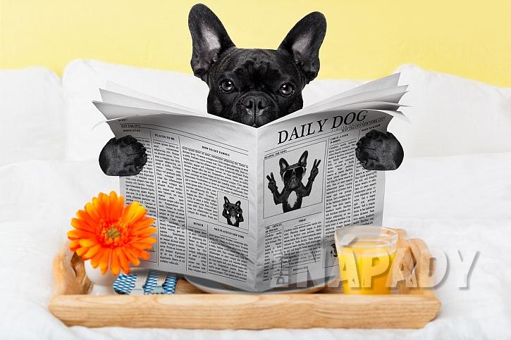 Takto pohodově by se váš pejsek mohl mít ve zvířecím hotelu (Zdroj: depositphotos.com)