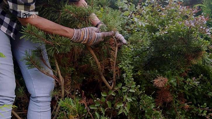 Podzimní hnojení vytrvalých rostlin