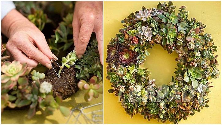 Věnce se sukulenty: rostlinky přichyťte sponkami