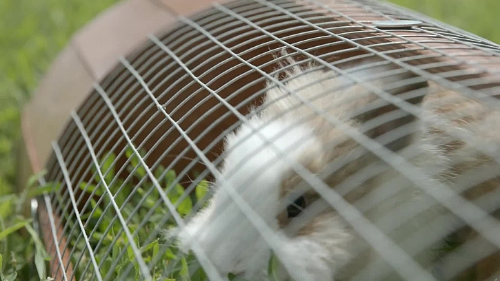 Vyrobte si venkovní mobilní výběh pro králíčky nebo morčata