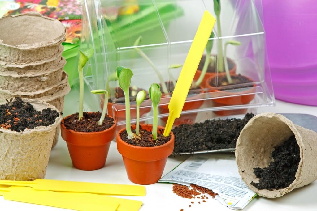 Předpěstování: připravte si silnou a zdravou sadbu z vlastních zdrojů