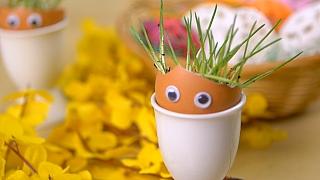 Velikonoční osení: Skořápkové květináčky sočkama