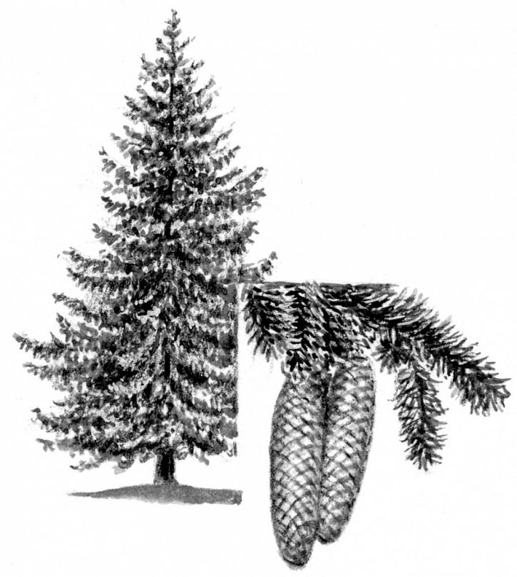 Tip na vánoční dárek pro milovníky stromů