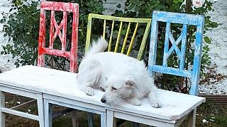 Zahradní lavice ze starých židlí: Návod krok za krokem