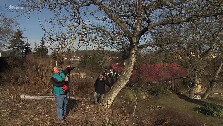 Průřez stromů ze země