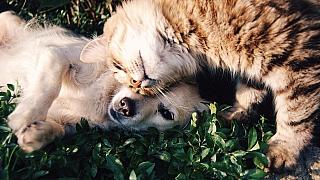 Pes a kočka pod jednou střechou aneb základní pravidla pro harmonické soužití odvěkých (ne)přátel