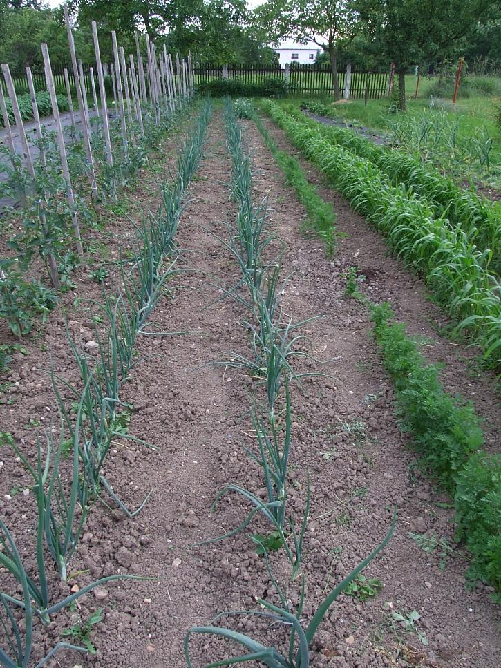 zeleninové záhony 4